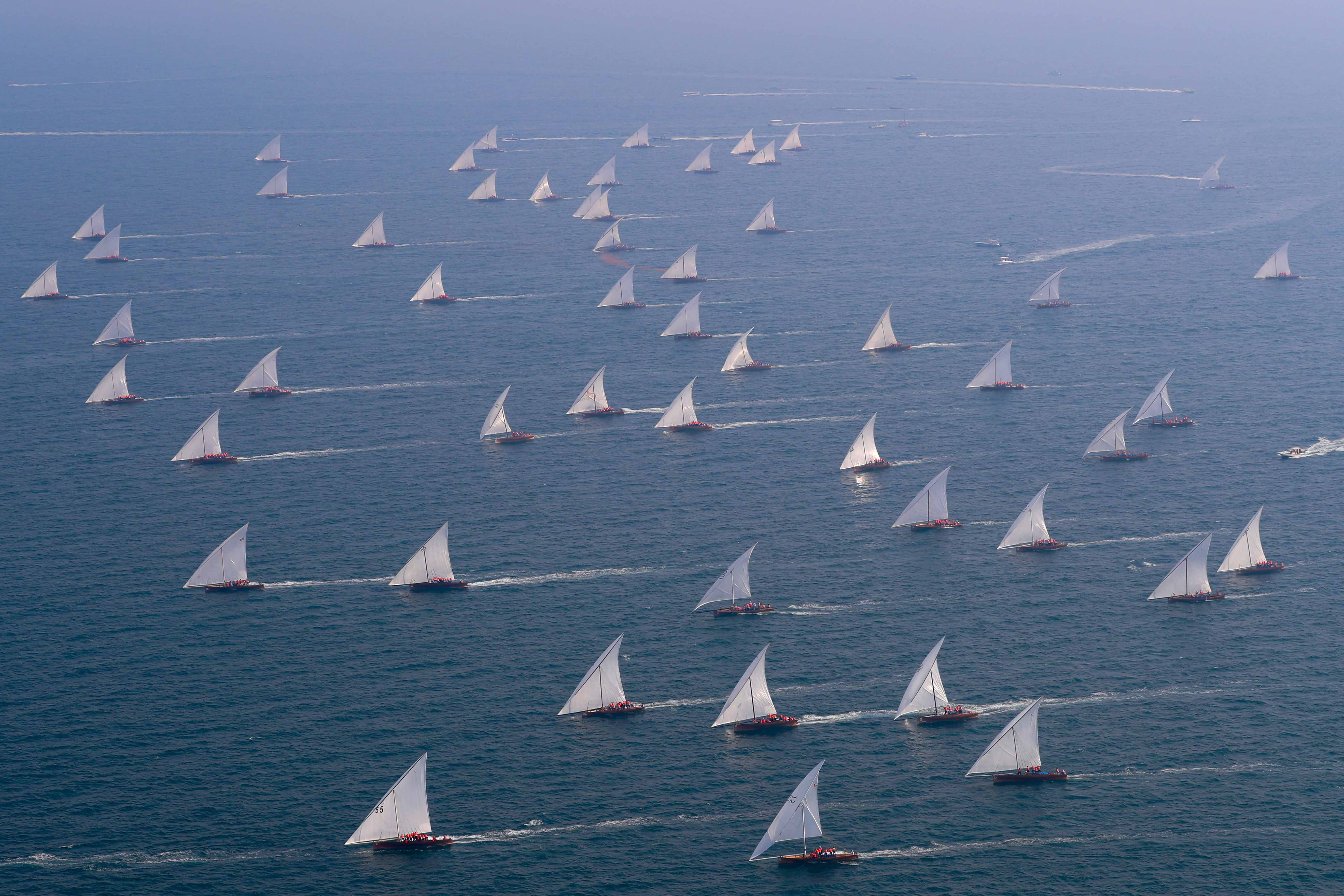 84 boats for 43ft Dubai Traditional Dhow Sailing Race Today